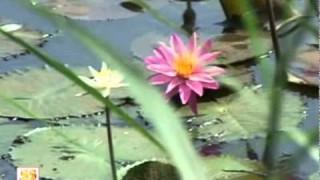 Bhajan | Teri Maya Ka Na Paya Koi Par Yeh Mahima Teri Tu Hi Jaane || Arya Samaj